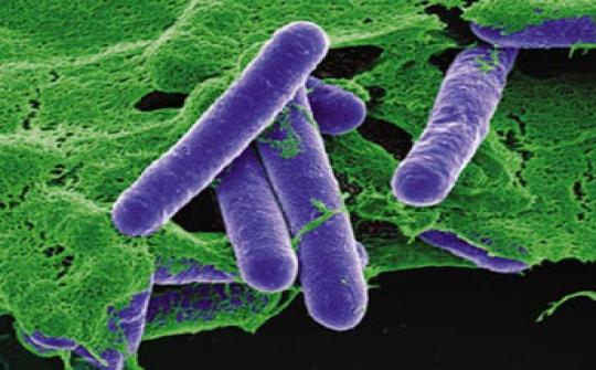 Cảnh giác ngộ độc do Clostridium botulinum
